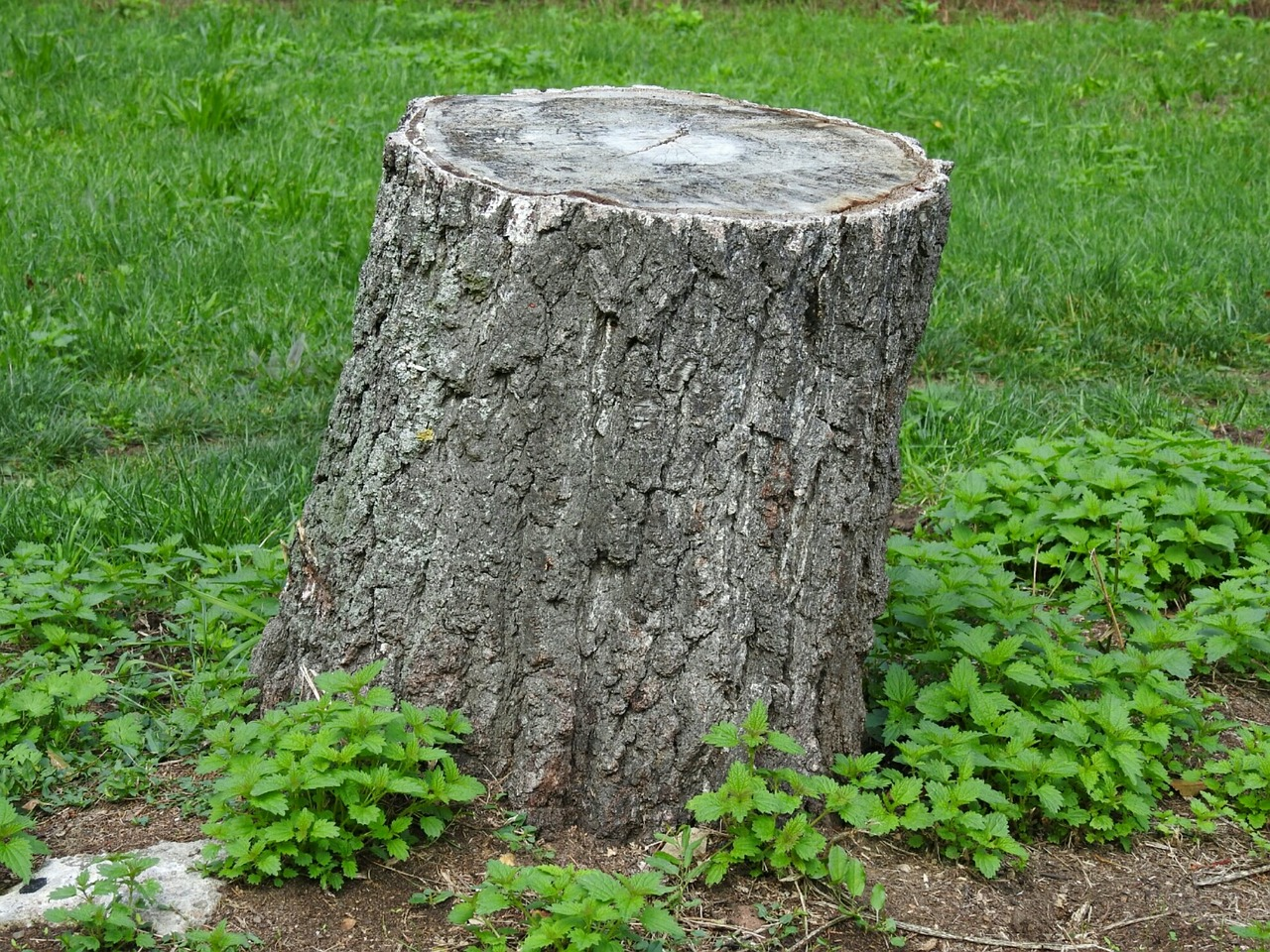 Image of a tree stump - Tree stump removal - let the digger do it - tree stump excavation - let the digger do it!